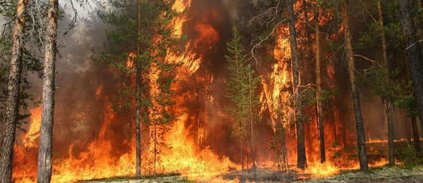горят_леса