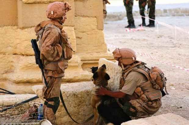 Россию обвиняют в строительстве военной базы в Пальмире