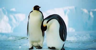 Ледовый панцирь Антарктиды